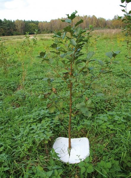 PlantaGard Eco-Mulchplatte