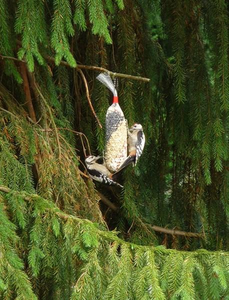 Triple Type Spiral Bird Feeder