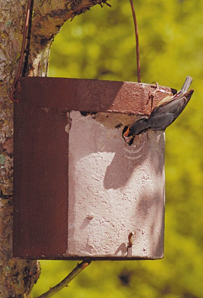 Nuthatch Nesting Box Model 5KL