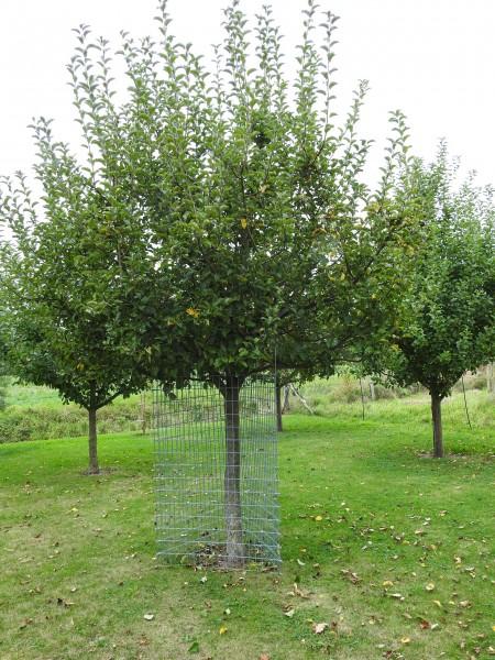 PlantaGard Einzelbaumschutz-Drahtelement 150 x 100 cm