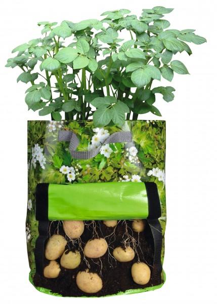 Sac de plants de pommes de terre