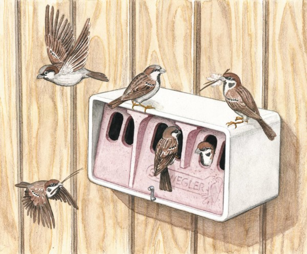 1 SP Sparrow Colony Bird House