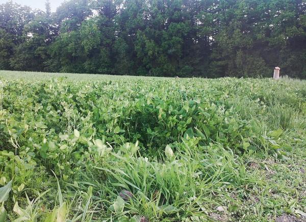 Pflanzensaat Waldrandmischung