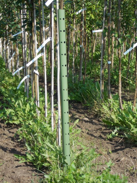 PlantaGard Wild- und Fegeschutz- Manschetten