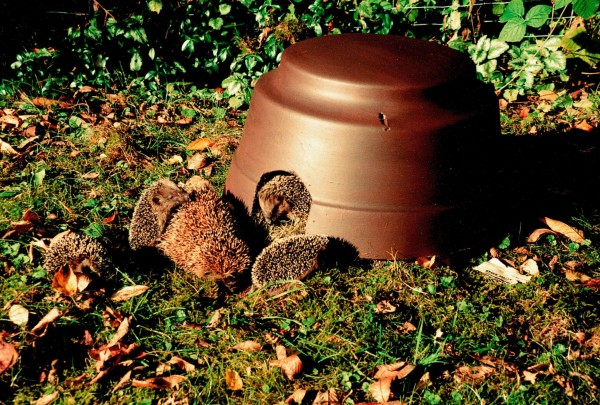 Hedgehog Dome with Insulated Bottom