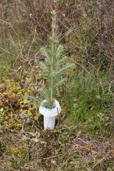 PlantaGard Rüsselkäferschutzkragen HyloPro aus Bio-Kunststoff
