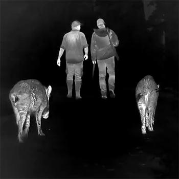 wildschweine_waermebild